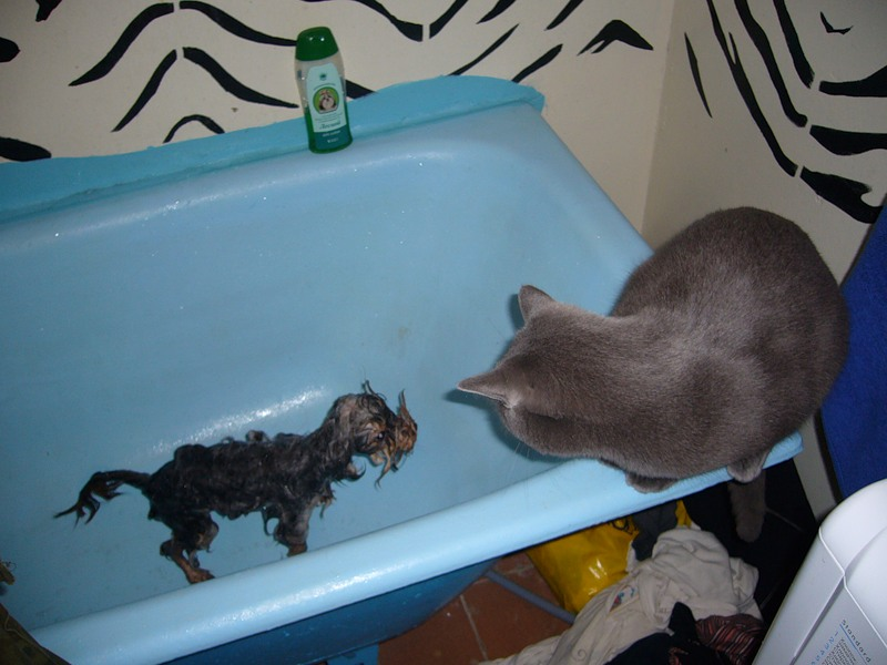 Кошки картинки. фото котят. фото приколы+с животными. приколы+в