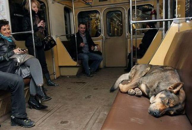 Фото приколы в метро - 6 Июня 2011 - Фото ...: divas.ucoz.com/news/2011-06-06-192
